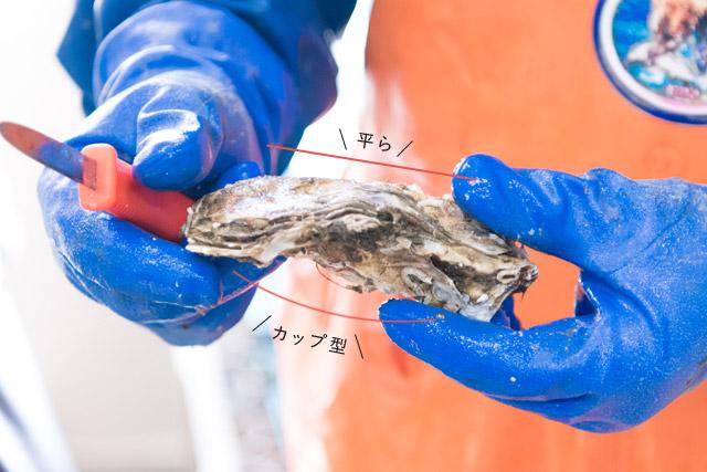 牡蠣の剥き方1