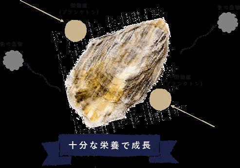牡蠣が十分な栄養を与えられるように考えられた漁師の工夫