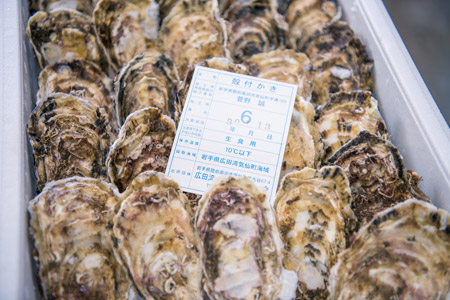 陸前高田広田湾産の一本松牡蠣の出荷作業
