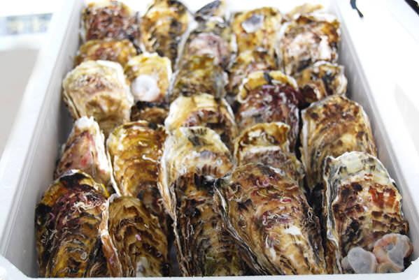一本松牡蠣の写真
