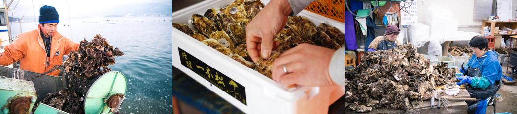 一本松牡蠣生産の様子