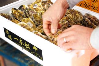 牡蠣の精選と梱包